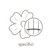 logo actyva specifici